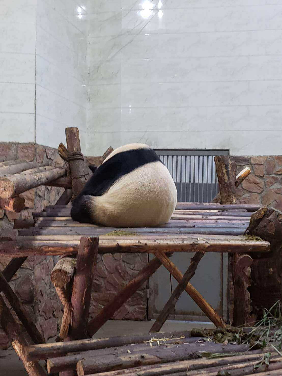 パンダの背中