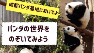 パンダのアイキャッチ画像